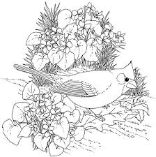 Bird Coloring Pages At Getdrawingscom Free For Personal Use Bird