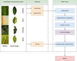 Proposed Framework for Barako Disease Classification   Download ...