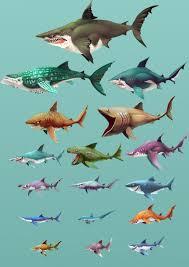 Shark Size Comparison Chart Artstation Hungry Shark World Playable Character