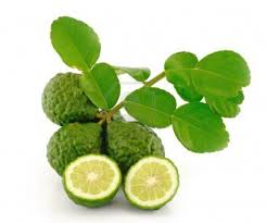 Image result for kaffir lime ('makrut' thai lime) pictures