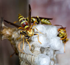 wasp hornet sting pain relief