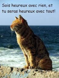 """Résultat de recherche d'images pour """"chats humour"""""""