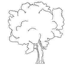 Coloring Pages Trees Free Downloads