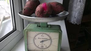 Курсовая работа ДИП голландцев по картошке ч Обновлено  Стебли улеглись поливочные штанги опущены на 30см