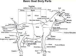 Goat Chart Pin On Homesteading Life Skills