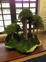 Bonsai PR | Japanese bonsai, Bonsai, Moss art