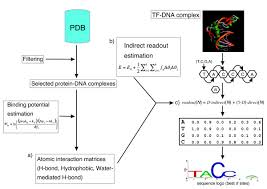 Flowchart Of The Dnaprot Algorithm Starting From The Set Of