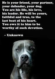 Pitbull Dog Quotes