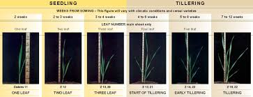 Wheat Growth Chart Zadoks Growth Scale Nvt Online