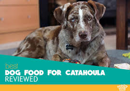 Catahoula Growth Chart 5 Best Dog Food For Catahoula In 2019 Our Reviews And Ratings
