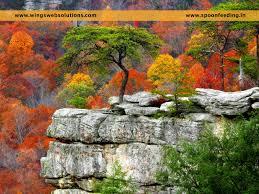 importance of biodiversity essay order essay