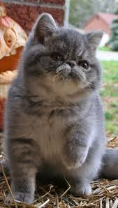 17 Best images about Cats so cute on Pinterest Kitty cats.