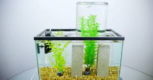 it s not an impossible fish tank it s just physics wired