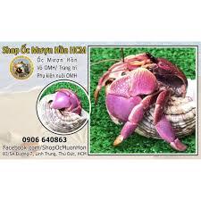 Lila, Vio, Brevi Harmit crab cao cấp - ỐC MƯỢN HỒN CAO CẤP INDO tại TP. Hồ  Chí Minh