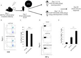 direct t cell activation via cd40 ligand generates high avidity thumbnail