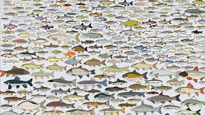 900 Freshwater Fish You Can Encounter In America Mental Floss