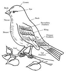 animal body parts coloring pages english voary coloring pages coloring pages now downloads body parts coloring sheets for kindergarten printable coloring on worksheets parts of the body for kindergarten
