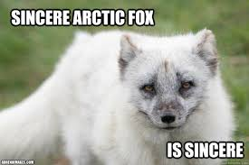 sincere arctic fox memes | quickmeme via Relatably.com