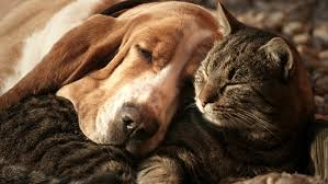"""Résultat de recherche d'images pour """"photos chats et chiens ensemble"""""""