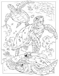 Ocean Animals Color Pages Free Printable Coloring Sheets Ocean Animals Free Printable Coloring