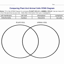Venn Diagram Plants Plant And Animal Cell Venn Diagram Features Plant And Animal Cells
