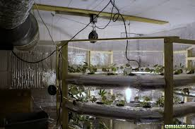 the light is a 1000w hps with a new hortilux bulb that i set up to move up and down using pullys and a light mover