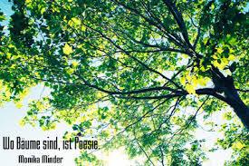Wald Und Baumgedichte Schöne Und Kurze Neue Moderne Und