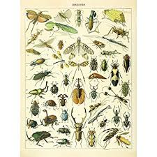Invertebrate Identification Chart Amazon Com Meishe Art Vintage Poster Print Insects