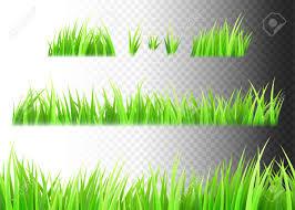 grass transparent background. Grass Vector Isolated On White, Black And Transparent Background. Tufts Of  Grass Stock Vector Background E