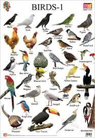 Bird Beak Chart Buy Birds 1 Educational Wall Charts Book Online At Low