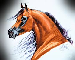 horse drawing in color. Brilliant Drawing Horse Drawing  Arabian In Color Pencil By Cheryl Poland With A