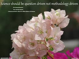 Paper Flower Quotes Punemate Page 6