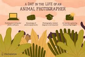 Animal Photographer Job Description Salary Skills More