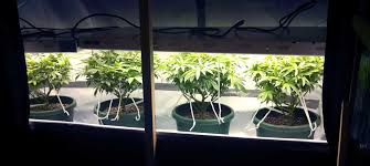 example of a t5 grow light fluorescent light fixture t5s can be kept