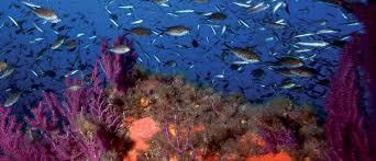 """Résultat de recherche d'images pour """"Des journalistes méditerranéens au contact des techniques de la pêche durable en Sicile"""""""