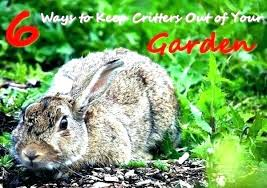 how do i keep rabbits out of my garden. Simple Rabbits How Do I Keep Rabbits Out Of My Garden Deter From To Your  For How Do I Keep Rabbits Out Of My Garden T