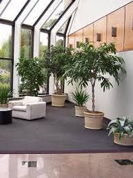 interior planting in hungerford jpg