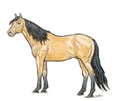 horse drawing in color. Fine Drawing Brown Buckskin On Horse Drawing In Color