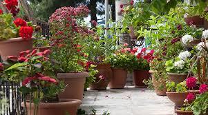 balcony gardens. Creating A Balcony Garden Gardens N