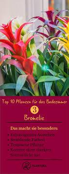 Pflanzen Fürs Badezimmer Unsere Top 10 Gartenheldinnen