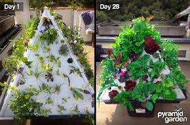 the pyramid garden is a personal at home aeroponic system for growing organic vegetables and