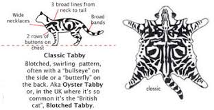 Tabby Patterns Magnificent Topkatz British Shorthairs