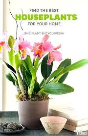 best indoor flowers best indoor house plants indoor flowers safe for cats