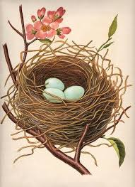 Nest w/Robin's Eggs   гнезда   Иллюстрации птицы, Старинные ...