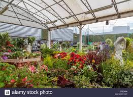 homebase garden centre london stock image