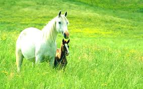 Horse Desktop Wallpaper 7036447