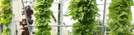 Vertical Hydroponic GrowTubeTM Systems free you from the strain and burden  of traditional soil based growing and let you
