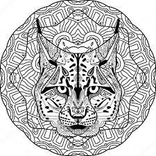 Wolf Vs Bobcat Jerusalem House