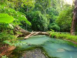 Tropical Landscape Blue River In The ...