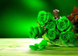 Rose flower wallpaper, Flower wallpaper ...
